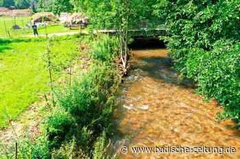 Weidenspreitlage soll dem Hochwasserschutz in Langenau dienen - Schopfheim - Badische Zeitung