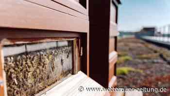 Polizeibienen im Natur-Einsatz | Ortenberg - Wetterauer Zeitung