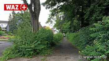 Wucherndes Grün macht in Bottrop vielen schwer zu schaffen - WAZ News