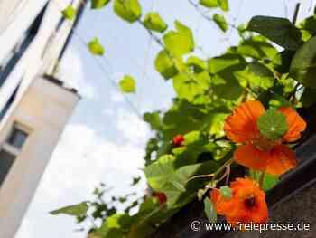 Mit diesen Kletterpflanzen schmücken Sie Ihren Balkon - Freie Presse