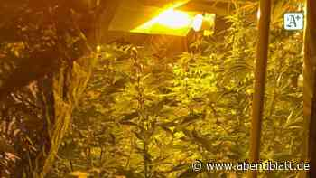 Cannabis-Plantage in Drochtersen ausgehoben - Hamburger Abendblatt