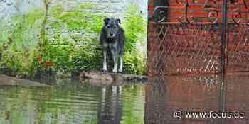 Hochwasser-Katastrophe in Deutschland: So helfen Sie betroffenen Tieren - FOCUS Online