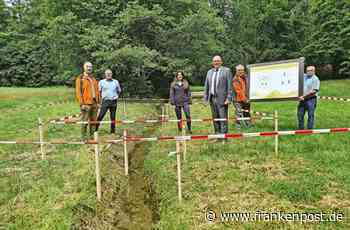 Erholung: Frischzellenkur mitten im Stadtwald - Frankenpost - Frankenpost