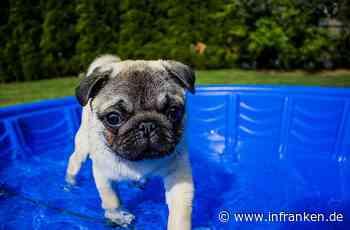Hundstage: Die heißeste Zeit des Jahres beginnt - was hinter dem Wetter-Phänomen steckt - inFranken.de