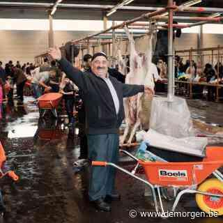 Jong Vld Gent gaat lijnrecht in tegen stadsbestuur. 'Terugbetaling slachtkosten is voor liberalen uit den boze'