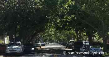 El plan forestal urbano de San José desconcierta, enoja a las partes interesadas - San José Spotlight - San Jose Spotlight