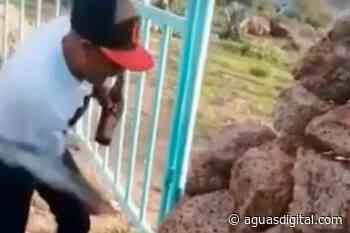 ¡Insensibles! Se divierten matando gatitos en San José de Gracia   - Aguasdigital.com