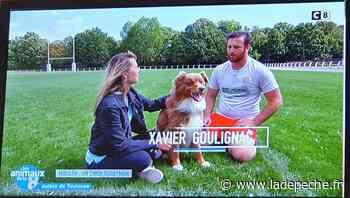 """""""Moustik"""", un chien mordu de rugby à Villefranche-de-Lauragais - LaDepeche.fr"""