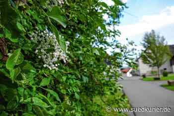 Bonndorf: Lebensmittel wachsen auch rund um Bonndorf öffentlich zugänglich - SÜDKURIER Online