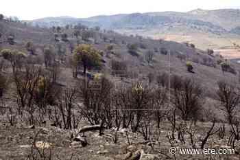 Controlado el incendio de Yerga, en La Rioja, tras quemar unas 360 hectáreas - EFE - Noticias