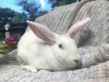 Northridge-Chatsworth Area Pet Adoption: Henn, Velvet, Amos & More - Northridge, CA Patch