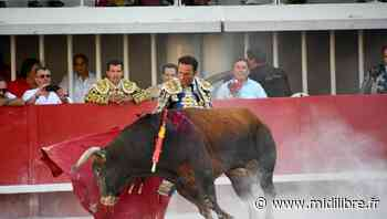 Pescalune de Lunel : le taureau Manzanilla gracié par Ferrera et le public - Midi Libre