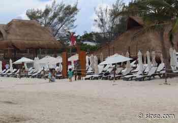 Recale de sargazo da tregua a Playa del Carmen - sipse.com