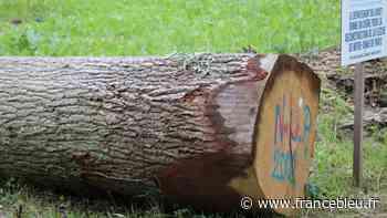 EN IMAGES - Un chêne du parc du château de Sully-sur-Loire va composer la nouvelle flèche de Notre-Dame - France Bleu