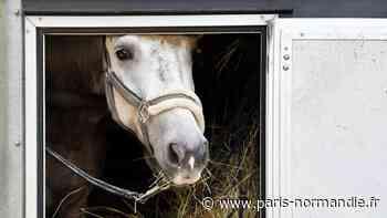 Un camion prend feu sur l'A28 entre Alençon et Rouen : le cheval à son bord sauvé de justesse - Paris-Normandie