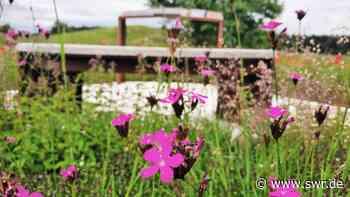 Neuer interaktiver Wanderweg: Keltenerlebnispfad in Grabenstetten - SWR