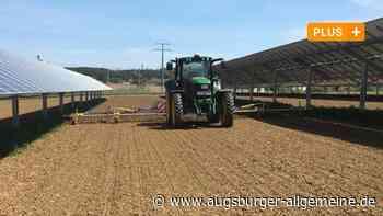 So gelingen Stromerzeugung und Lebensmittelanbau auf einer Fläche - Augsburger Allgemeine