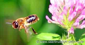 Honig-Ernte im Kreis Merzig-Wadern im Jahr 2021 so schlecht wie nie - Saarbrücker Zeitung