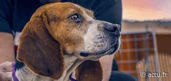 Mulhouse : pourquoi l'histoire des 90 chiens promis à l'euthanasie s'est dégonflée - actu.fr