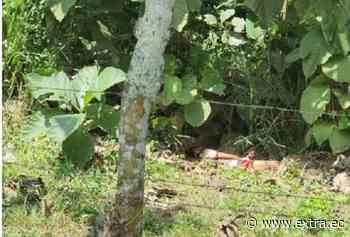 Atado y degollado en zona rural de Quevedo - Portal Extra