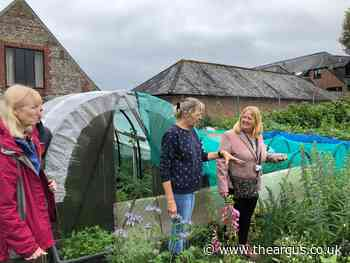 Call for report into number of empty allotments in Brighton