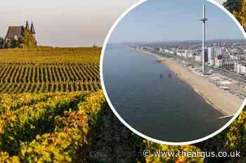 Greater Brighton Economic Board back South Downs wine plan