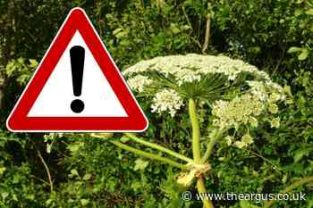 Warning over 'extremely toxic' Hogweed that has caused injury to adults and children
