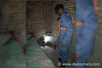 Robaron ovejas y las escondieron en sus casas, quedaron detenidos - Diario Chaco