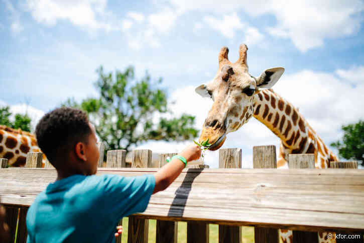 Oklahoma City Zoo offering free admission before school year starts