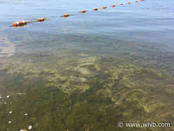 Chautauqua County health officials warn of harmful algae blooms
