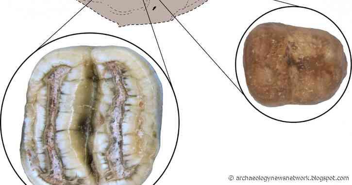 Fossil rodent teeth add North American twist to Caribbean mammals' origin story