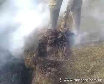 Video: trabajadores registraron un extraño fenómeno en cercanías de Junín - Diario Río Negro