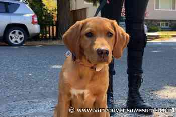 Dog training business booming busy after COVID-19 pandemic - Vancouver Is Awesome