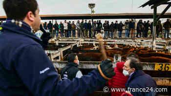 El mercado de ganado de Liniers, último recuerdo de la Buenos Aires rural - FRANCE 24