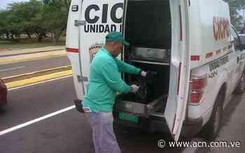 Murió niño al tragarse una semilla de níspero en el Zulia - ACN ( Agencia Carabobeña de Noticias)