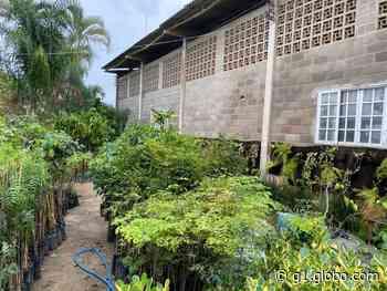 Araruama, RJ, terá distribuição de mudas de plantas para a população neste sábado - G1