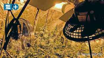 Brilon: Marihuana-Plantage und Ecstasy an Süßigkeiten - Westfalenpost