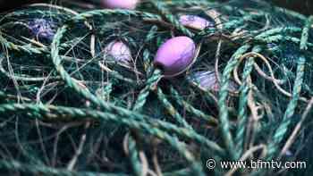 Boulogne-sur-Mer: des filets de pêches biodégradables testés cet été - BFMTV