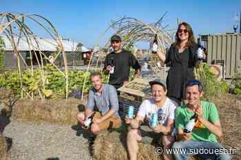 Bordeaux : Akébia végétalise l'esplanade du Pertuis - Sud Ouest