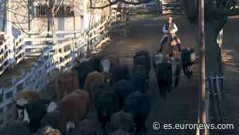 Buenos Aires dice adiós al mercado de ganado de Liniers - Euronews Español