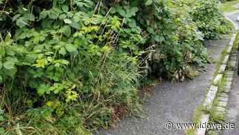 Wildwuchs aus Privatgrundstücken - Bäume und Sträucher rechtzeitig zuschneiden - idowa