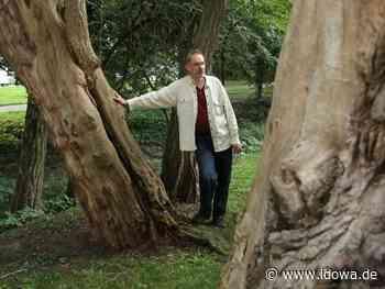 Experte gibt Antwort - Warum hat Straubing so viele verschiedene Bäume? - idowa