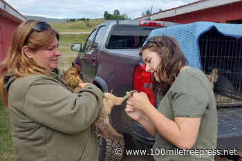 VIDEO: Williams Lake offers shelter for Lone Butte wildfire evacuees with animals – 100 Mile House Free Press - 100 Mile Free Press