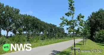Zomereiken in Deinze sterven door vele droge zomers - VRT NWS