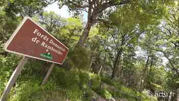 Yvelines. Le massif de Rambouillet : une forêt millénaire - actu.fr