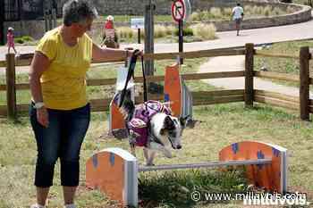 Millau Grands Causses : une destination qui a du chien ! - Millavois.com