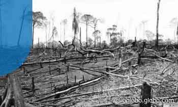 Símbolo da luta ambiental, Reserva Chico Mendes foi a terceira mais desmatada em junho - O Globo