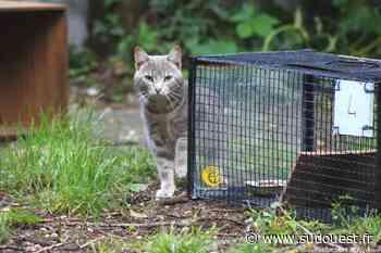 Pessac : une action de grande ampleur autour des chats errants - Sud Ouest