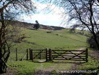 Country Walk: Exploring Dalby Forest | York Press - York Press