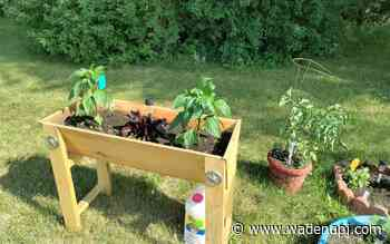 Our Father's House plants community garden - Wadena Pioneer Journal